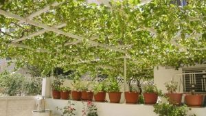 Increase your Home Price via Roof Cultivation