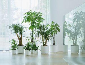 النباتات المنزلية المنقية للهواء