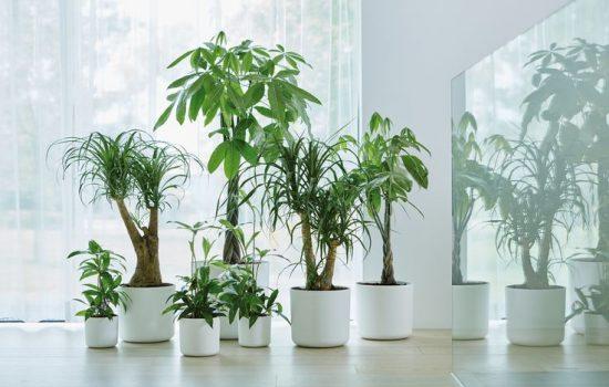 قائمة بأفضل النباتات المنزلية المنقية للهواء